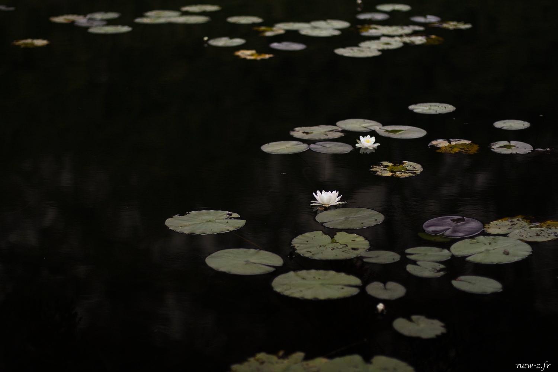 Reportage photographique de paysage réalisé par Alexis Zimmermann Photographe Professionnel à Strasbourg en Alsace